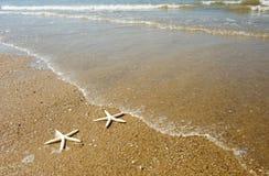 Pares de estrellas de mar imágenes de archivo libres de regalías