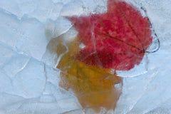 Pares de folha sob o gelo de cristal. fotografia de stock royalty free