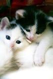 Pares de gatinhos engraçados pequenos no jogo Imagem de Stock