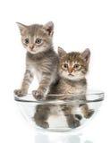 Pares de gatinhos pequenos imagem de stock