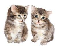 Pares de gatitos mullidos lindos Imagen de archivo