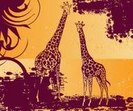 Pares de giraffe Foto de Stock Royalty Free