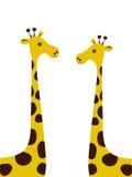Pares de giraffes. Fotos de Stock Royalty Free