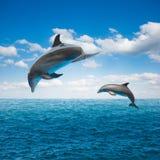 Pares de golfinhos de salto imagem de stock