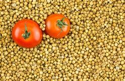 Pares de grandes tomates maduros vermelhos em um fundo de sementes de coentro secas com base do espaço da cópia Imagem de Stock