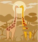 Pares de jirafas Fotos de archivo libres de regalías