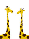 Pares de jirafas. Fotos de archivo libres de regalías