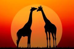 Pares de jirafas Imágenes de archivo libres de regalías