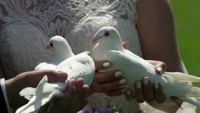 Pares de la boda de novia y del novio con las palomas almacen de video