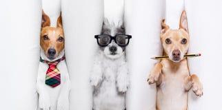 Pares de la quemadura de perros imagen de archivo libre de regalías