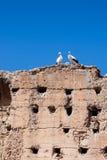 Pares de las cigüeñas blancas Imagenes de archivo