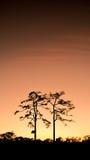 Pares de los árboles de la silueta Fotografía de archivo libre de regalías