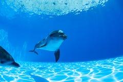 Pares de los delfínes Imagen de archivo libre de regalías