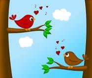 Pares de los Lovebirds del día de tarjetas del día de San Valentín que se sientan en árbol Imagen de archivo libre de regalías