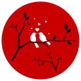 Pares de los pájaros del amor Imágenes de archivo libres de regalías