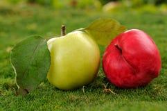 Pares de maçãs na grama verde outdoors_2 Fotos de Stock