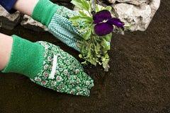 Establecimiento de las flores Fotos de archivo libres de regalías