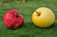Pares de manzanas en hierba verde al aire libre Imagen de archivo