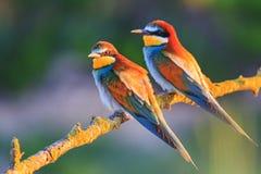 Pares de pájaros exóticos en la puesta del sol Fotos de archivo libres de regalías