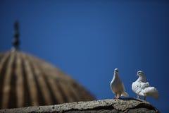 Pares de palomas en una pared Imagenes de archivo