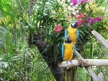 Pares de papagaios (paisagem) Imagens de Stock Royalty Free