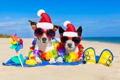 Pares de perros el vacaciones de verano de la Navidad Imagen de archivo