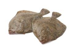 Pares de pescados frescos del rodaballo fotografía de archivo libre de regalías