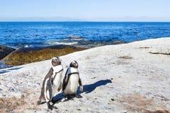 Pares de pinguins em África do Sul imagens de stock
