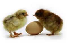 Pares de polluelos y del huevo Imágenes de archivo libres de regalías