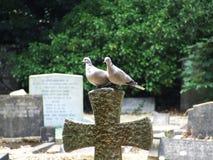 Pares de pombas que sentam-se na cruz de pedra no cemitério imagens de stock royalty free