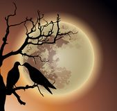 Pares de pombo na árvore inoperante Fotos de Stock Royalty Free