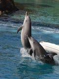 Pares de salto del delfín foto de archivo libre de regalías