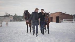 Pares de Smilling que caminan con los caballos al aire libre en un rancho del país en el invierno Caballos principales del hombre almacen de metraje de vídeo