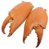 Pares de tenazas enormes de los cangrejos Imagen de archivo libre de regalías