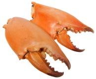 Pares de tenazas enormes de los cangrejos Foto de archivo