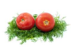 Pares de tomates sobre un poco de eneldo Fotografía de archivo libre de regalías