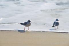 Pares de vacaciones de las gaviotas en la playa Imagenes de archivo