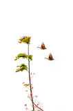 Pares de Wren Fly Imagem de Stock