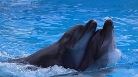 Pares del delfín que nadan en agua azul Cámara lenta almacen de video