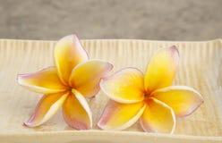 Pares del frangipani imagen de archivo libre de regalías