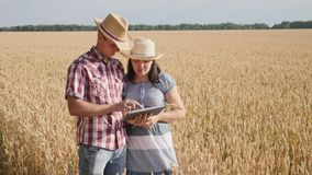 Pares del granjero usando la tableta digital en campo de trigo maduro almacen de metraje de vídeo