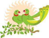 Pares del loro en árbol Foto de archivo libre de regalías