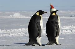 Pares del pingüino en Navidad Imagen de archivo libre de regalías