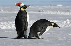 Pares del pingüino en Navidad Foto de archivo libre de regalías
