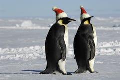 Pares del pingüino en la Navidad Imagen de archivo libre de regalías