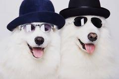 Pares divertidos de perros en sombreros y gafas de sol Fotos de archivo libres de regalías