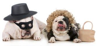 Pares divertidos del perro Foto de archivo