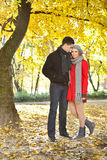 Pares do amor que apreciam o outono no parque Imagens de Stock Royalty Free