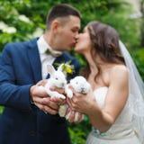 Pares do casamento com dois coelhos pequenos Foto de Stock Royalty Free