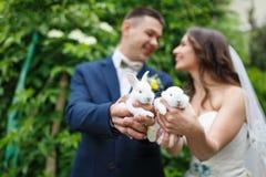 Pares do casamento com dois coelhos pequenos Imagem de Stock Royalty Free